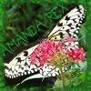 Me: Butterfly