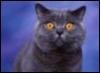 realpestilence: shocked!face kitty