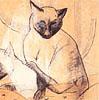 кошка восточная