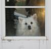 Wolfys Window