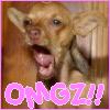 Chihuahua - OMGZ!