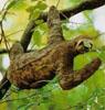 sloth_dc