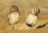 совы на отдыхе ;)