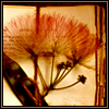 thistlefics userpic