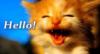 professornana: kitty