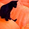 black cat on orange (pumpkins) backgroun