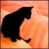 MomGonagall: Pumpkin Cat