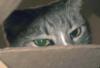 demure, sad, polite, boxed in, Misty in Box