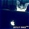 Cats 'n Macs