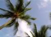 palmadacocco userpic