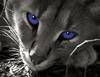 Глаза (милый)