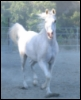 bayareahorses