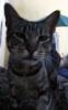browneyedcat
