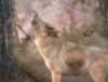 Wolf Mysitic