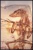 fossil, critter, dromeosaur