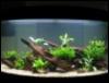 Merrow: aquarium