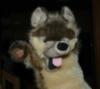 Fenris Wolf