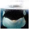 Orca Kohana