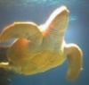 pre-ap biology, science, sam houston, biology, turtle