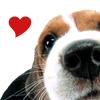 General - Beagle - Love