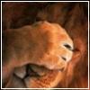 lion_ess userpic
