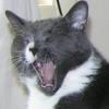 jules yawn