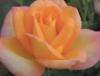 skyegirl217 userpic