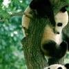dajing_hui userpic