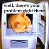 problem cat