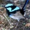 iridescent_wren userpic