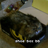shoe box bb