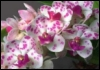 wilde_orchid userpic