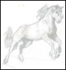 My Horse Sketch