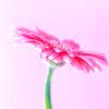 pink_love26 userpic