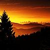 Starlit Woods: sunset trees