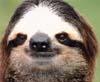 slothzilla userpic
