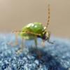 la femme stygian: Bug