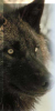 mysticsablewolf