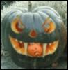 feral pumpkin