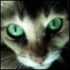 green_eye_cat