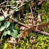 turquoisethyme userpic