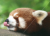 happiestpanda userpic