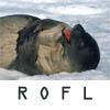 Dina Clare: rofl seal