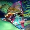 siguanea: fish