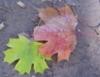 vipra_ur userpic