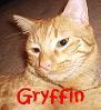 Psycho Cats [userpic]