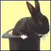 rabbit_inthehat userpic