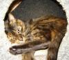 airycat userpic