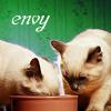 7 kitty sins envy