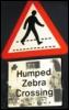 humped zebra